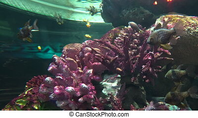 Tropical fish near colorful corals, close-up