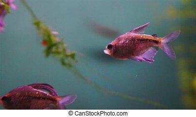 Tropical Fish On A Coral Reef In Aquarium