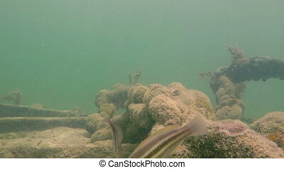 Tropical fish on the sea floor Florida Keys - Florida Key...