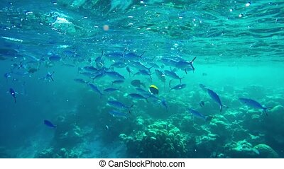 Tropical Fish over Coral Reef from Submerged Perspective -...