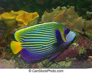 Tropical fish - Beautiful exotic multicolored fish among the...