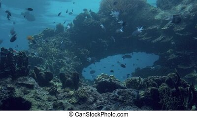 Tropical fish swim in Coral reef in Queensland Australia -...