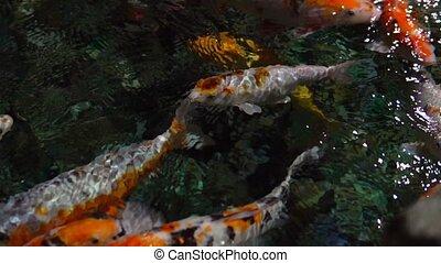 tropical fish swim in sea water