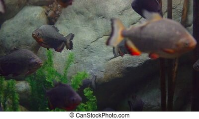 tropical fish swim in sea water 1