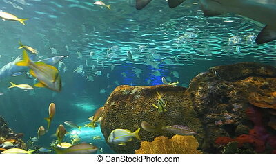 Tropical fish swimming in a reef