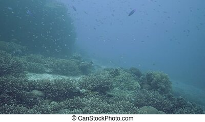 Tropical fish swimming in deep sea on coral reef background....