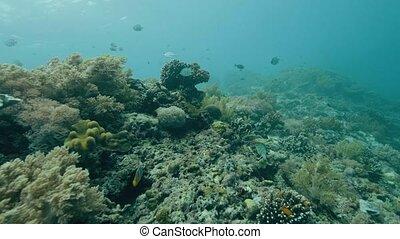 Tropical fish swimming near coral reef on sea bottom. Scuba...