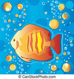 Tropical Fish Swimming Underwater - Bright tropical fish ...