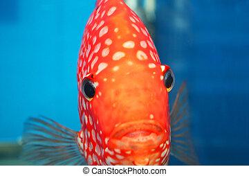 Tropical fish, Thailand. - Tropical fish on display at...