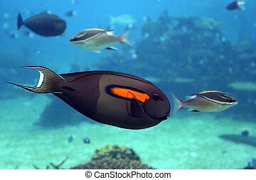 Tropical fish at Seaworld - Australia