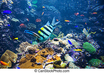 Tropical fish under the water
