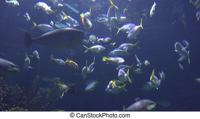 Tropical Fish Under Water