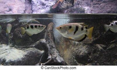 Tropical fish wildlife 1920 x 1080p HD video