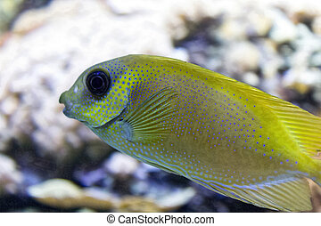 tropical fish with yellow