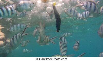 tropical fishes feeding