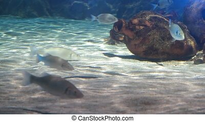 Tropical fishes 1080p HD Video