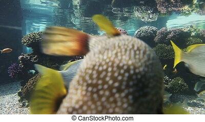 Fishes swimming in aquarium. Underwater Observatory Marine Park. Eilat, Israel