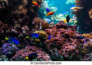 tropical fishes meet in blue coral reef sea water aquarium. Unde