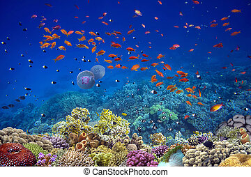 Tropical fishes on a beautiful coral garden in Red Sea. Egypt