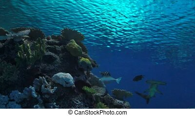 Tropical fishes swimming underwater
