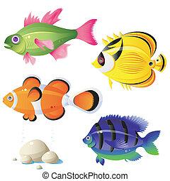 tropical fisk