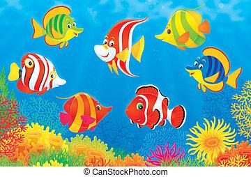 tropical fiskar