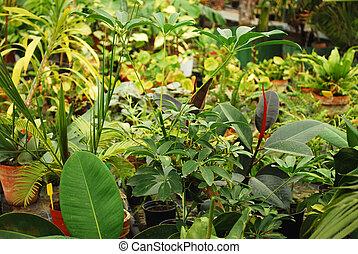 Tropical Flora - Tropical flora in botanical garden in...