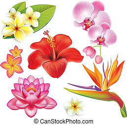 tropical, flores, Conjunto