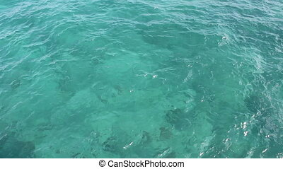 Tropical Florida Ocean Water - Background of wavy green blue...