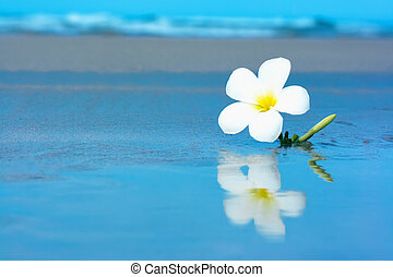 Tropical flower on the beachv - Refltction of tropical...