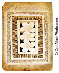 Tropical flower Plumeria. Old postcard.