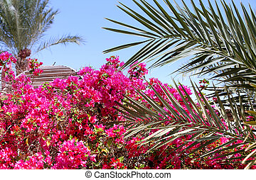 Tropical flowers and palm leaves against blue sky