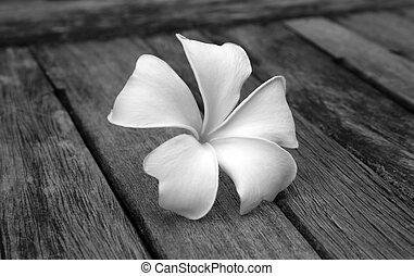 Tropical flowers frangipani on wood