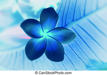 Tropical flowers frangipani (plumeria) invert - Tropical...