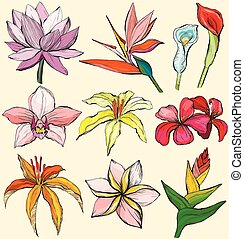 Tropical flowers - Water lily, orchid, clematis, plumeria, frangipani, bird of paradise and hibiscus
