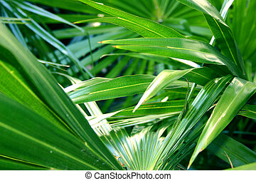 Tropical Foliage - Green tropical foliage