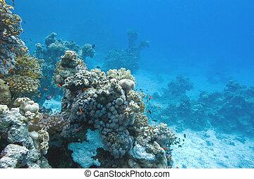 tropical, fondo, submarino, mar, arrecife, coral