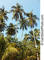 Tropical forest along the Caribbean Sea