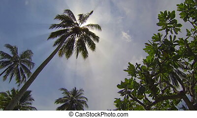 Tropical forest and coconut tree