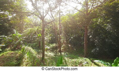 Tropical forest filled sunlight