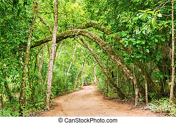 Tropical forest in Panama - Trees in tropical forest near...