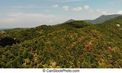 Tropical forest on island. Fantastic drone view of green jungle on mountain ridge of amazing tropical island. Blue sea. Exotic paradise panorama of rainforest.
