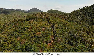Tropical forest on island. Fantastic drone view of green jungle on mountain ridge of amazing tropical island. Exotic paradise panorama of rainforest.