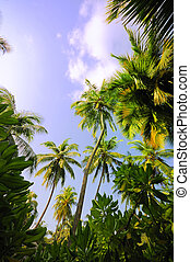 Tropical Forest - Picture of tropical forest at Maldives.