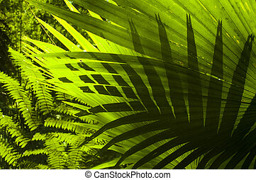 Sun shining to the palm leaf in tropical forest.