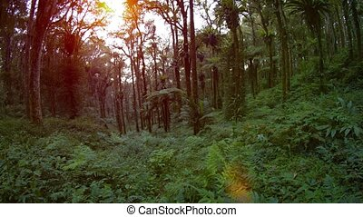 Tropical Forest Wilderness with Sound