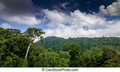 Tropical forest with clouds running to camera time lapse