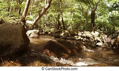 Tropical forest with creek and big ferns. Thailand - ...
