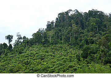 tropical forests in the mountains