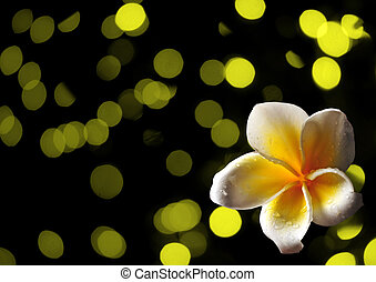 tropical frangipani flower on abstract yellow background